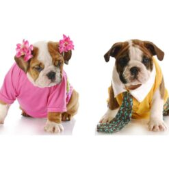 Pet Perfumes For Both